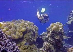 ocean indien plongee