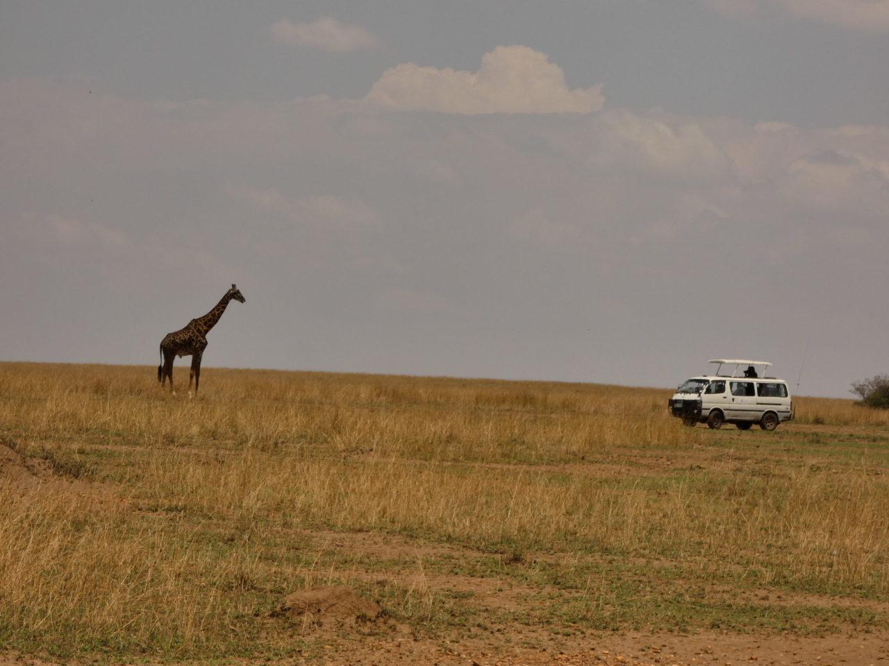 véhicule safari kenya