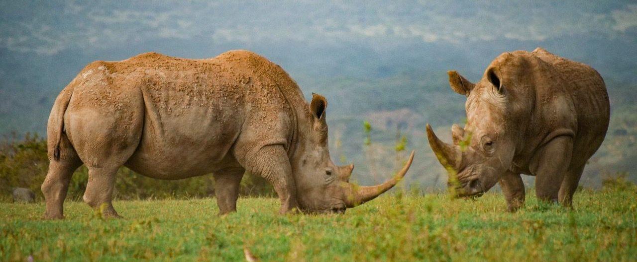 Ol Pejeta Kenya