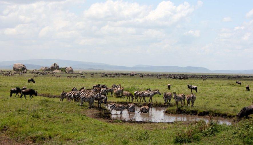 migration masai mara