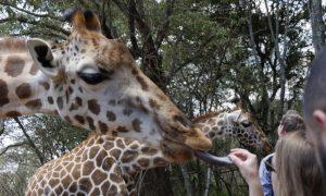 girafe center nairobi